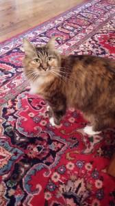Daisycat
